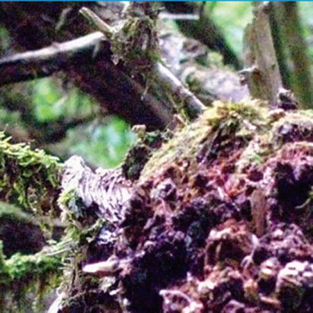 Pole Waldgeschichten