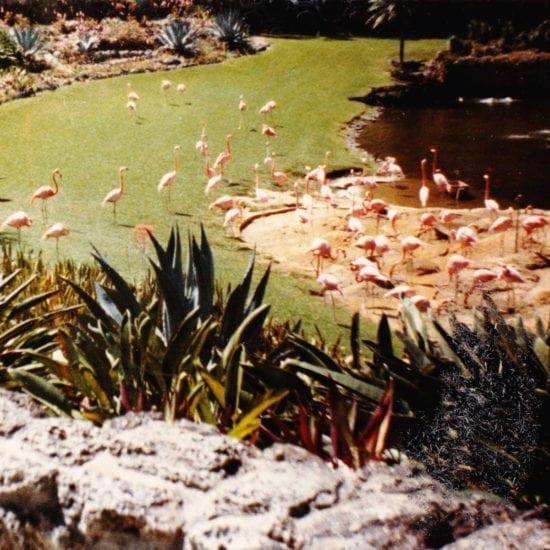 Imaginary Softwoods: Gold Fiction Loop Garden